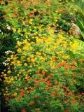 Tropische Blumenhintergründe Lizenzfreie Stockfotografie