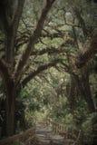 Tropische Bomen Royalty-vrije Stock Foto