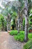 Tropische Bomen in Amaze'n Margaret River Stock Fotografie