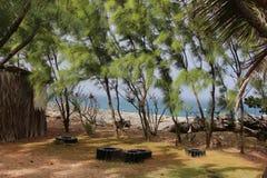 Tropische bomen, Barbados Stock Foto's