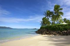 Tropische bomen blauwe oceaan Stock Afbeelding