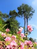 Tropische bomen en bloemen in park over zonnige blauwe hemel in Thaila stock fotografie