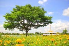 Tropische bomen en Gele goudsbloemenbloem in de tuin royalty-vrije stock foto's