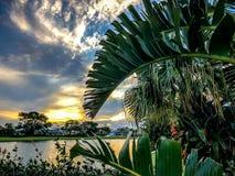 tropische bomen en zonsondergang stock afbeeldingen