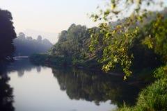 Tropische bomen langs Mahaweli-rivier Royalty-vrije Stock Fotografie