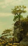 Tropische bomen op rotsachtig eiland bij oceaan Stock Fotografie