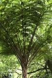 Tropische boom Stock Foto