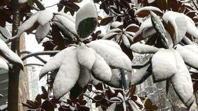 Tropische boom onder de anomalie Vancouver van het sneeuwklimaat stock footage