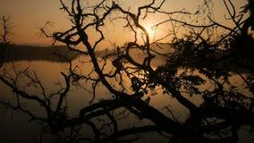 Tropische boomachtergrond met palmsilhouetten bij zonsopgang stock videobeelden
