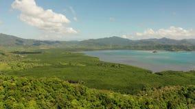 Tropische bos en bergen, Palawan, Filippijnen stock videobeelden