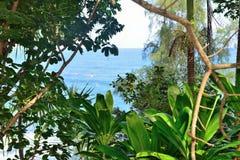 Tropische bos en oceaan Stock Afbeeldingen