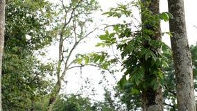 Tropische bos en wind in de ochtend stock videobeelden