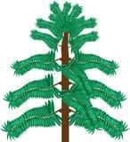 Tropische bosboom Stock Afbeeldingen