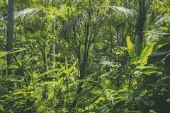 Tropische bosmening in Aziatisch land, groene aardtextuur, de achtergrond van de wildernismening Stock Fotografie