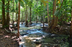 Tropische bossen Stock Afbeeldingen