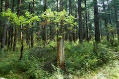 Tropische bossen, mos op boomwortels stock foto's
