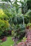 Tropische bosweg Stock Fotografie