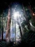 Tropische bosweg Stock Afbeelding