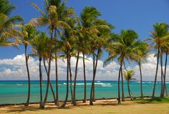 Tropische Brisen unter Palmen in Kauai stockfoto