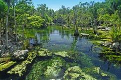 Tropische Cenote in Mexico Stock Foto's