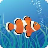 Tropische clownvissen onder water Stock Foto's