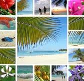 Tropische collage. Exotische reis. Stock Afbeelding