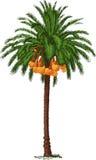 Tropische dadelpalm Stock Foto's