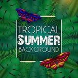Tropische de zomerachtergrond met exotische groene heldere bladeren met tekstruimte en vlinders stock foto