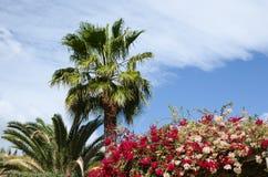 Tropische de zomerdroom Stock Foto