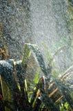 Tropische de zomerregen stock afbeeldingen