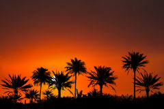 Tropische de Zonsopgangachtergrond van de Eilandzonsondergang Stock Afbeelding