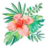 Tropische die bladeren op witte achtergrond worden geïsoleerd installaties: exotische bloemhibiscus en bladeren Vector Stock Foto