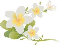 Tropische die bloemen op wit worden geïsoleerd Stock Foto's