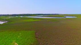 Tropische die rivier door moerasland en moerassen wordt omringd stock footage
