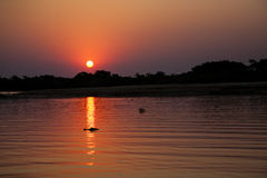 Tropische die Zonsondergang Rivier, het Noorden Pantanal, Brazilië wordt overdacht Stock Foto