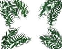 Tropische dunkelgrüne Palmblätter auf vier Seiten set Getrennt auf weißem Hintergrund Abbildung Stockbild