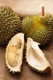 Tropische Durianfrucht Stockbild