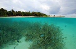 Tropische Eiland en Coral Reef Royalty-vrije Stock Foto