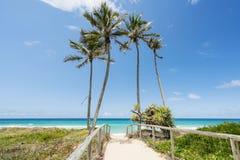 Tropische eilandpalmen voor blauwe hemel en witte wolken Stock Foto