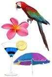 Tropische Elementen Stock Afbeeldingen