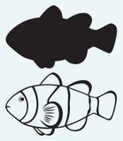 Tropische ertsadervissen Stock Afbeeldingen