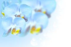 Tropische exotische Blumen der blauen Orchidee über Steigung Stockfoto