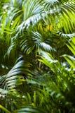Tropische exotische palmbladenachtergrond Stock Foto