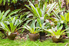 Tropische Farnanlage im Garten stockbild