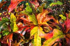 Tropische Fauna Stockbilder
