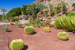 Tropische fauna van het eiland van Gran Canaria royalty-vrije stock foto