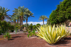 Tropische fauna van het eiland van Gran Canaria royalty-vrije stock afbeeldingen