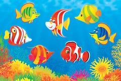 Tropische Fische über einem Korallenriff Stockbild