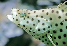 Tropische Fische 14 Stockfoto