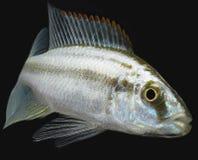 Tropische Fische Stockfotos